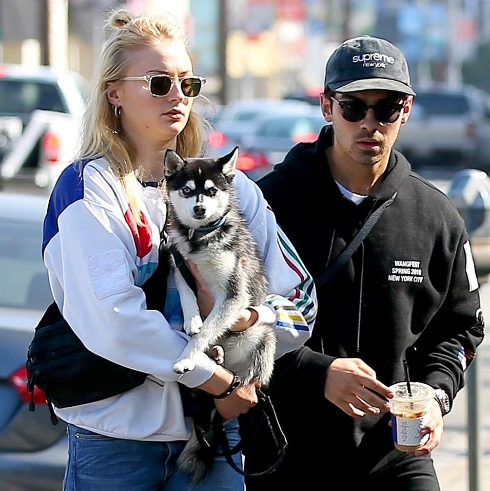 Joe-Jonas-and-Sophie-Turner-Adopt-Dog