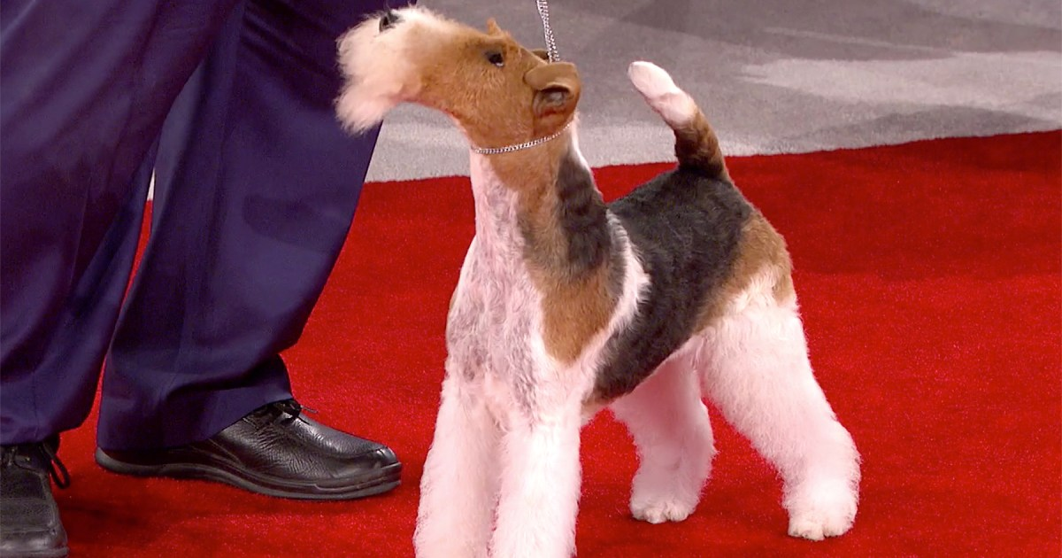 Who Won Best In Show At The National Dog Show