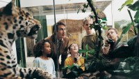 Male Teacher and Primary School Students in a Museum Looking at Animal Models in a Vitrine