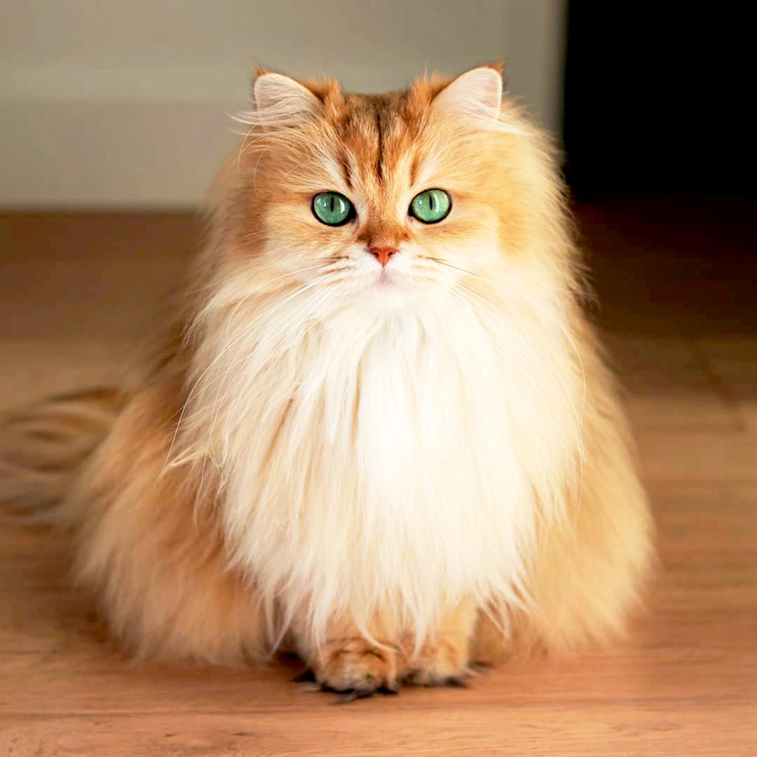 Most Meet World's Photogenic Cat' Smoothie'the gvIYfyb76