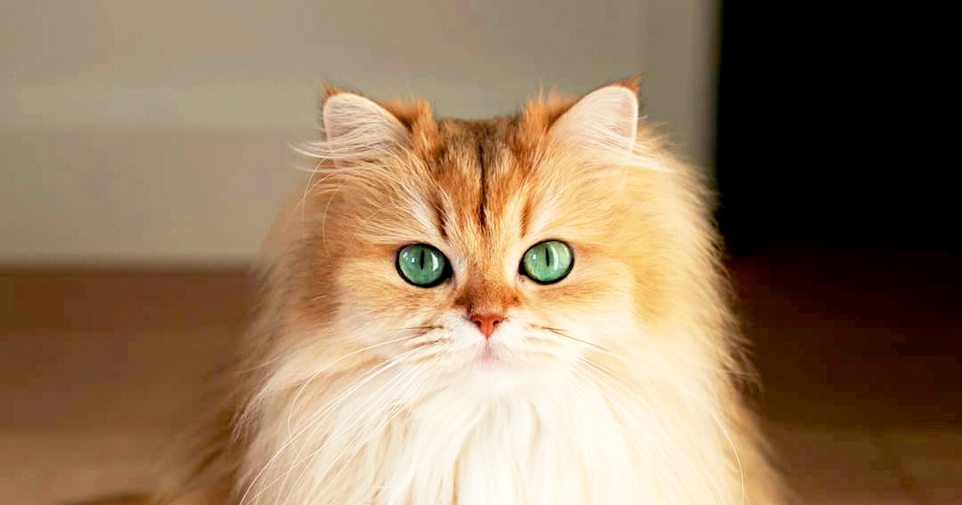 Meet Smoothie The Worlds Most Photogenic Cat