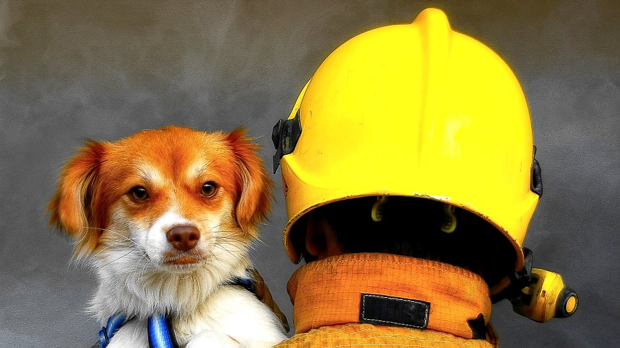 firefighter-rescue-dog