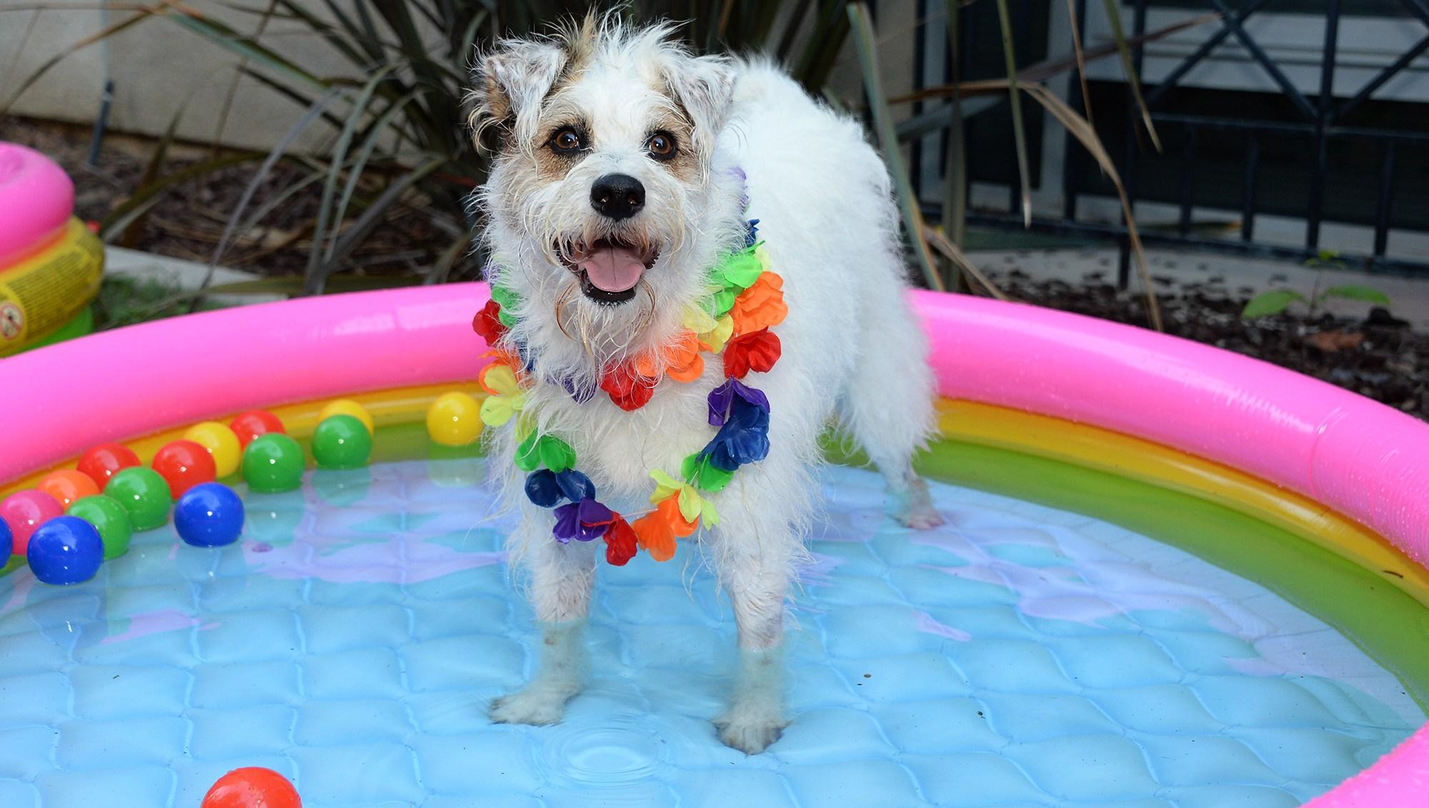 Hallmark Channel's Happy the Dog Hosts Backyard BBQ for Ronald McDonald House Kids