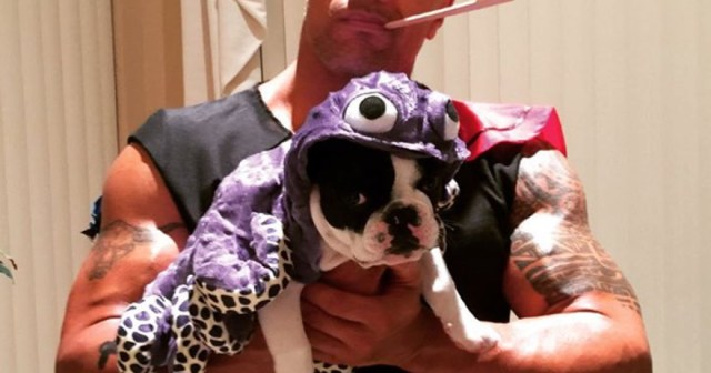 Miley Cyrus, Dwayne Johnson and More Celebrities Whose Pets Have the Best Halloween Costumes in Hollywood.jpg