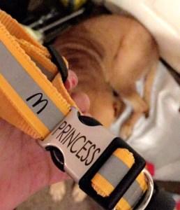 McDonald's dog collar