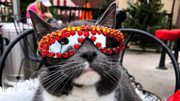 All the Places Sunglass Cat Keeps It Cool in Denver
