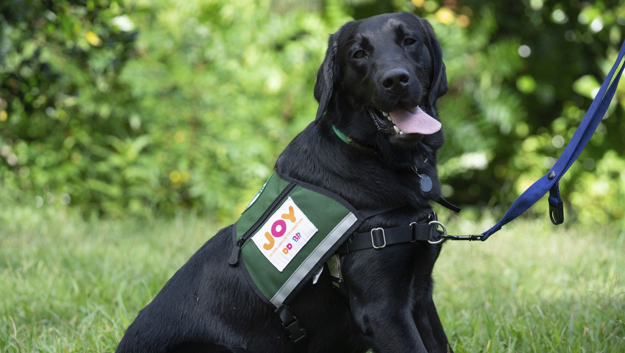 Dunkin' Launches Dogs for Joy Program That Aims to Bring Dogs to Children's Hospitals Nationwide