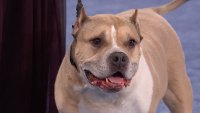 Watch the Heartwarming Recap from the 2019 American Rescue Dog Show