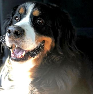 Sarah Michelle Gellar's Dog Bella Died