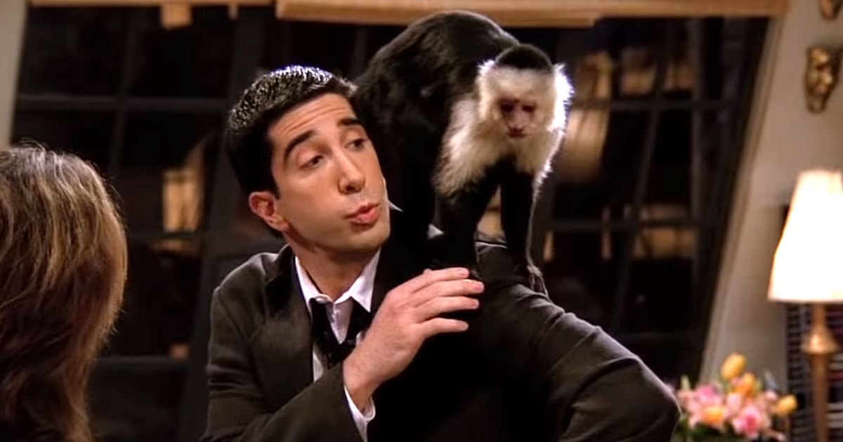 Monkey Who Played Marcel on 'Friends' Has a Role in 'Y'
