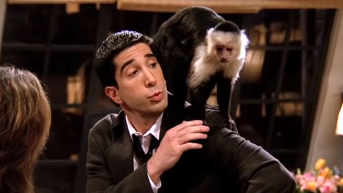 Katie, the Monkey Who Played Marcel on 'Friends,' Has a Role in FX's 'Y'