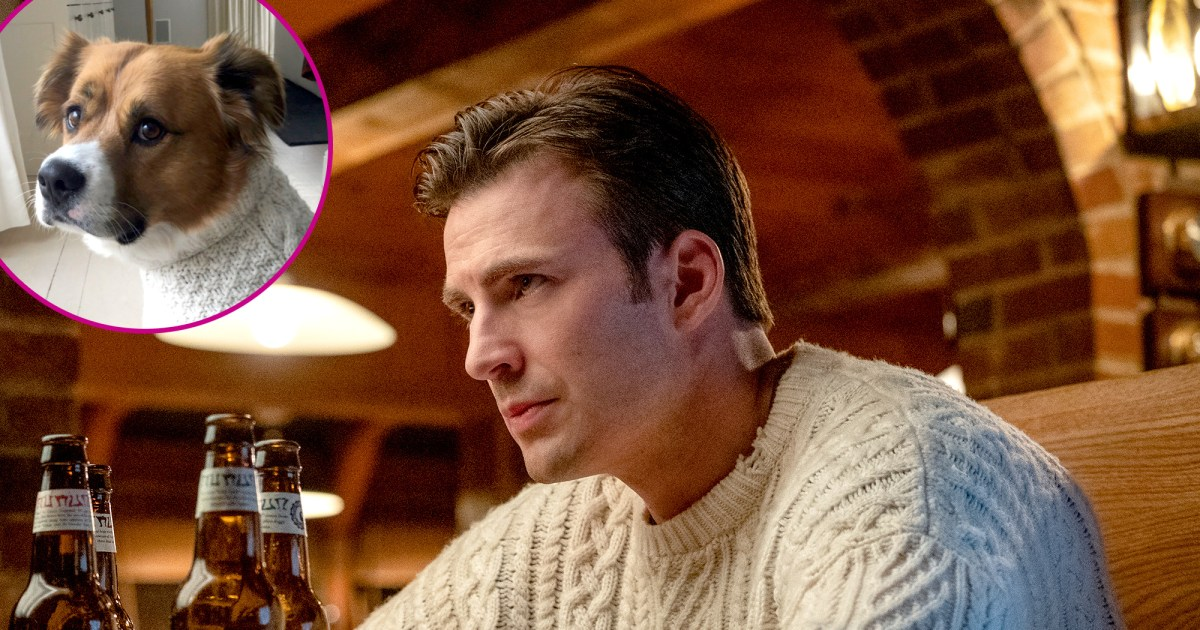 "Chris Evans Knives Out Sweater dog - أعطى كريس إيفانز كلبه ""البلوز خارج"" سترة لعيد الميلاد"