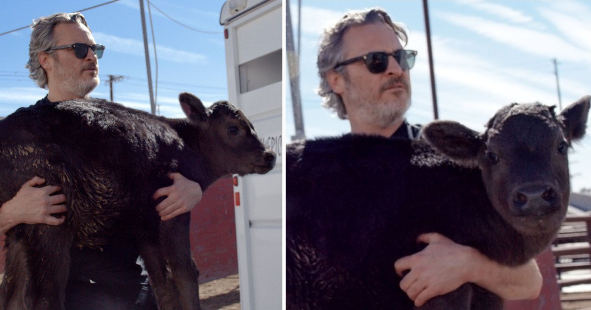 Joaquin Phoenix Rescues Cow and Her Newborn Calf After Moving Oscars Speech