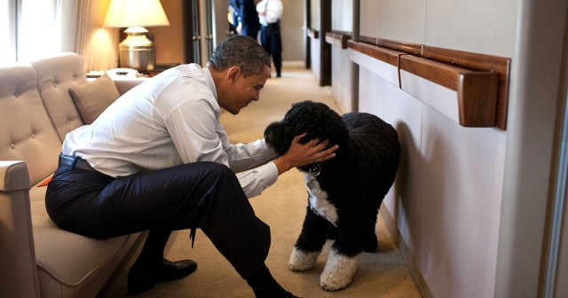 Barack Obama Mourns Dog Bo's Death: 'Our Family Lost a True Friend'.jpg