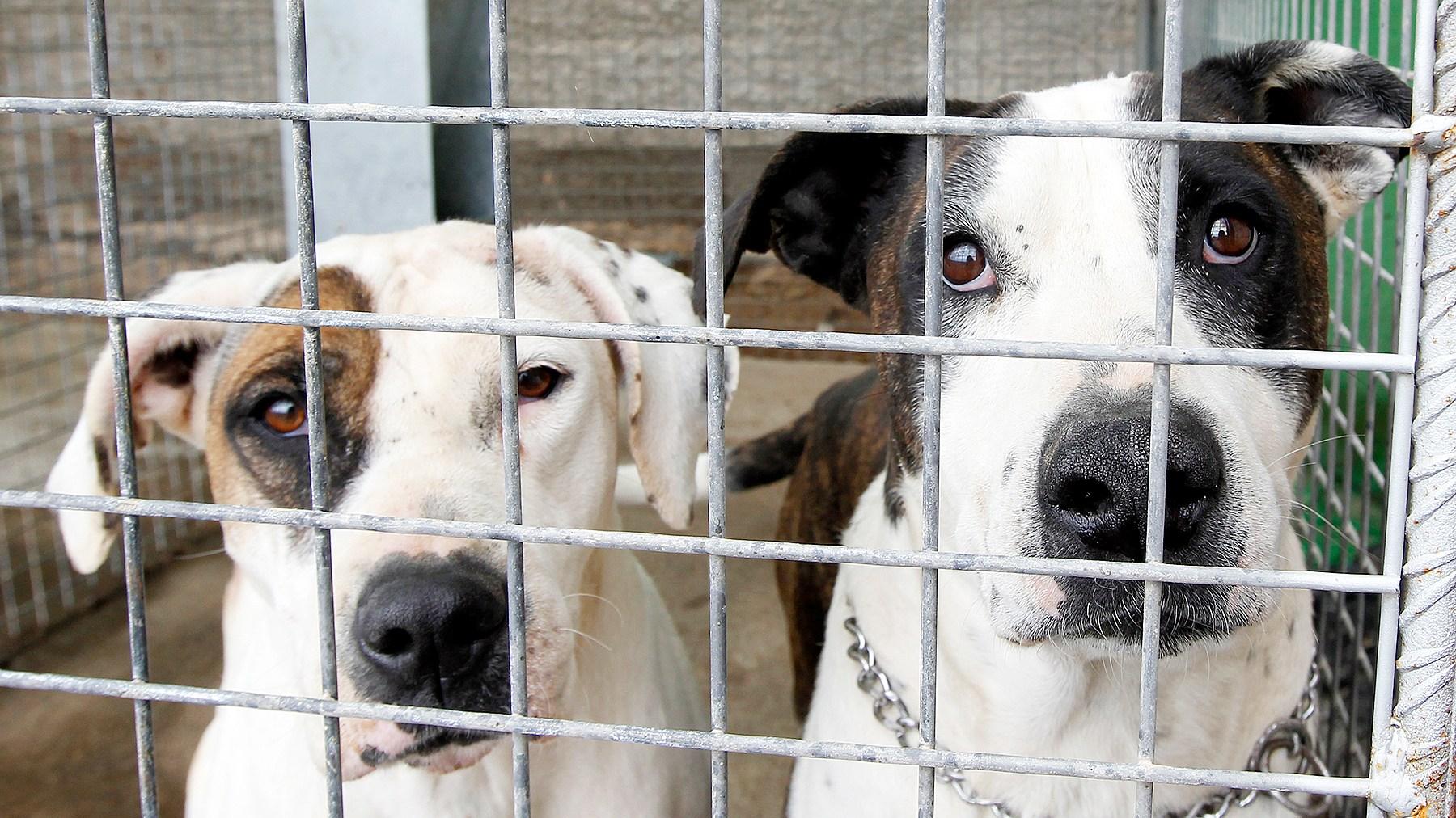 animal-shelter-af26efc3-6ad5-43ac-9e49-0dc2f72a249f