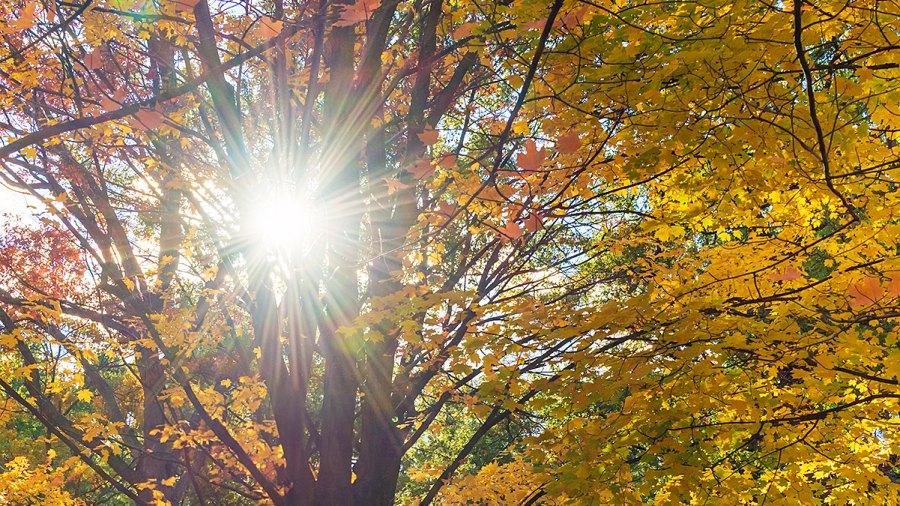 autumn fall daylight savings time