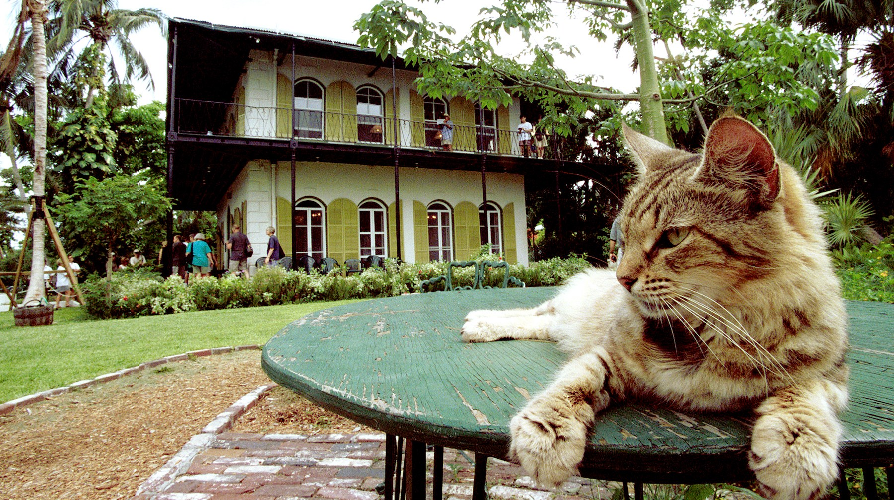 A cat rests on a table in the garden of American author Ernest Hemingway''s home June 15, 1999 in Key West, Florida.
