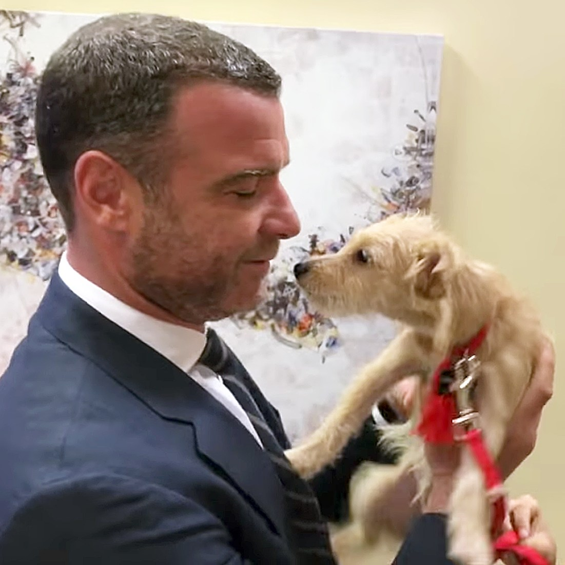 Liev Schrieber puppy hurricane