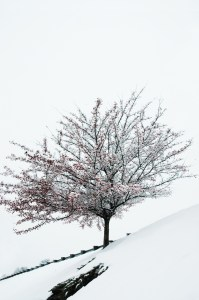 December 2013 Snow Scene ©2013 Maricar Jakubowski, www.usmaltd.com No usage without written permission is allowed.
