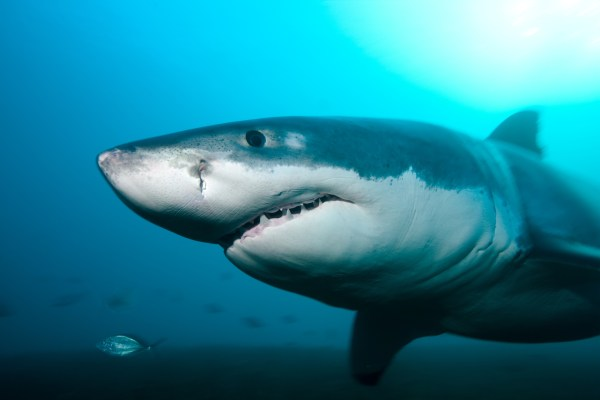 Heres Why Sharks Are Cool Data Mine US News