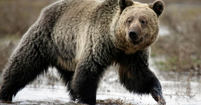 Stocks enter final full week of the year on the brink of a bear market 1