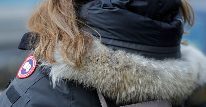 Coyote fur is in big demand thanks to popular parkas 8