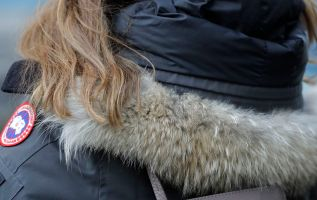 Coyote fur is in big demand thanks to popular parkas 2