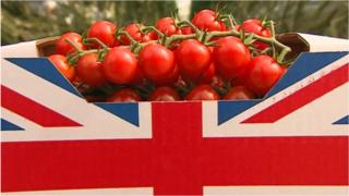 Norfolk and Suffolk greenhouse plan 'will provide 10% of UK tomatoes' 6