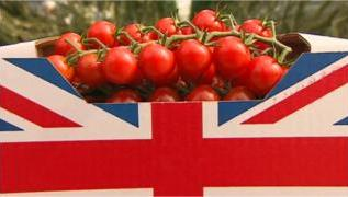 Norfolk and Suffolk greenhouse plan 'will provide 10% of UK tomatoes' 2
