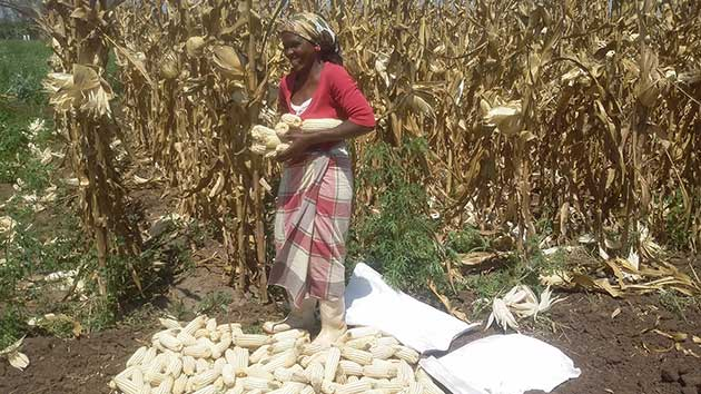 – Successful Crop Innovation Is Mitigating Climate Crisis Impact in Africa – 3