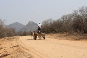 Charcoal Production Risks Future of Zimbabwe's Native Forests 3