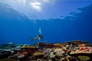 The Last Coral Reef Wilderness: the Chagos Archipelago 3