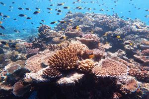 Time to End Generational Injustice with a 'Global Blue New Deal' to Protect Oceans 8