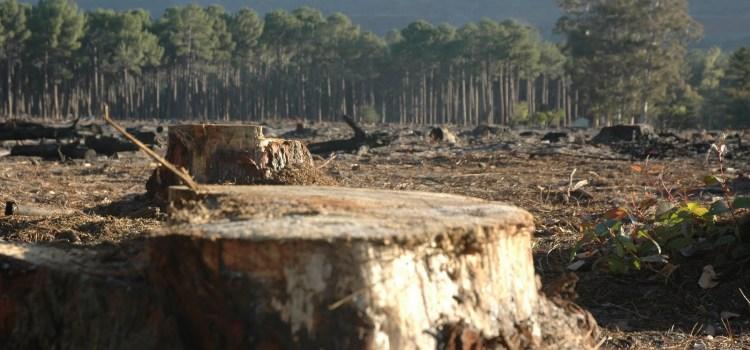 Guvernul Dăncilă dă liber la defrișări pe locul celei mai mari tragedii de mediu din România