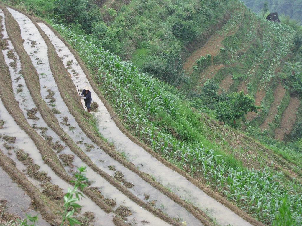 LONE TERRACE FARMER, Lindsay Deen,  Longsheng County, Guangxi, China, May 2008.  I stopped to snap the picture, and my traveling companions continued onward without me. Alone, I honored the farmer's toils by capturing the image, and alone, he tended the plants.