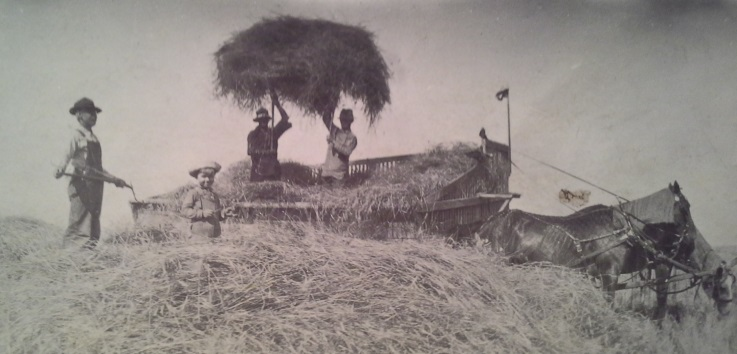 Bringing in the crop, circa 1917. That might be Neb in the foreground. Photo courtesy of Rusty Winters.