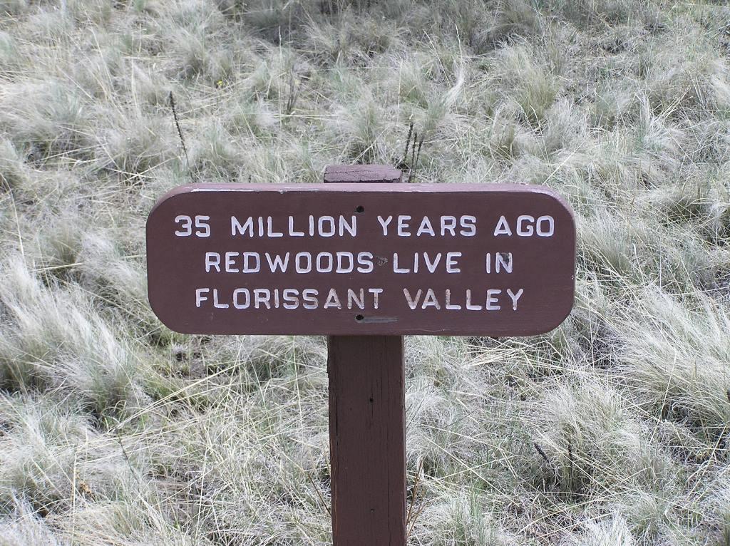 Redwood Area