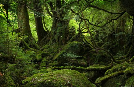 Aokigahara Forest: In the Shadow of Mt. Fuji