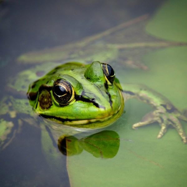V Frog Kpm Gesundheit | US...
