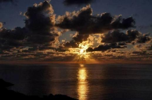 Ustica alba