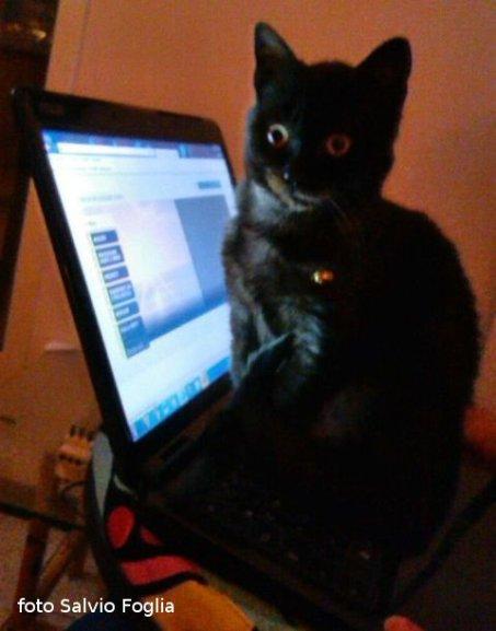 """Gatto """"informatico"""""""