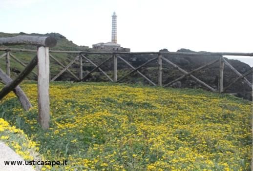 Ustica, fiori spontanei in riva al mare