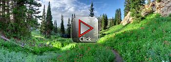 VR panorama of summer wildflowers - 360 degree panorama