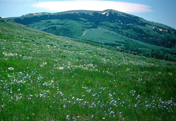 Popular Birding Sites Box Elder County