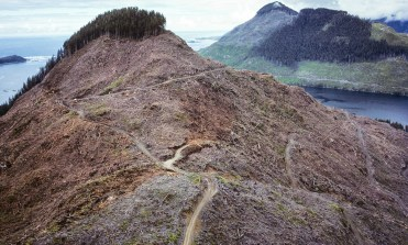 British Columbia clear-cut forest