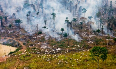Cows and smoke in Brazil