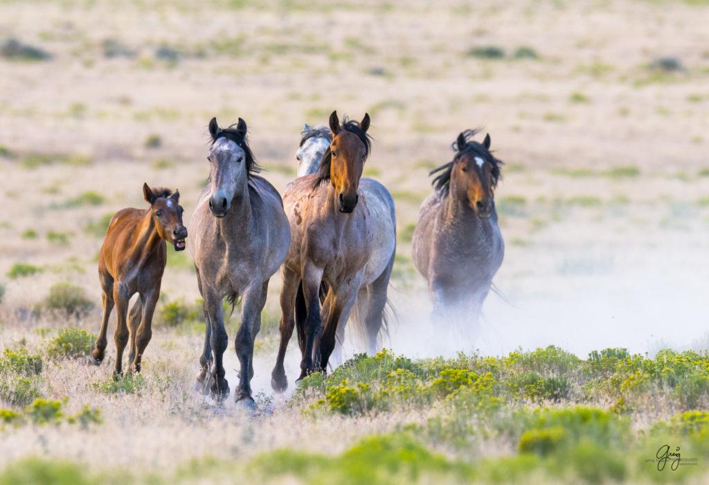 Herd Running Horse