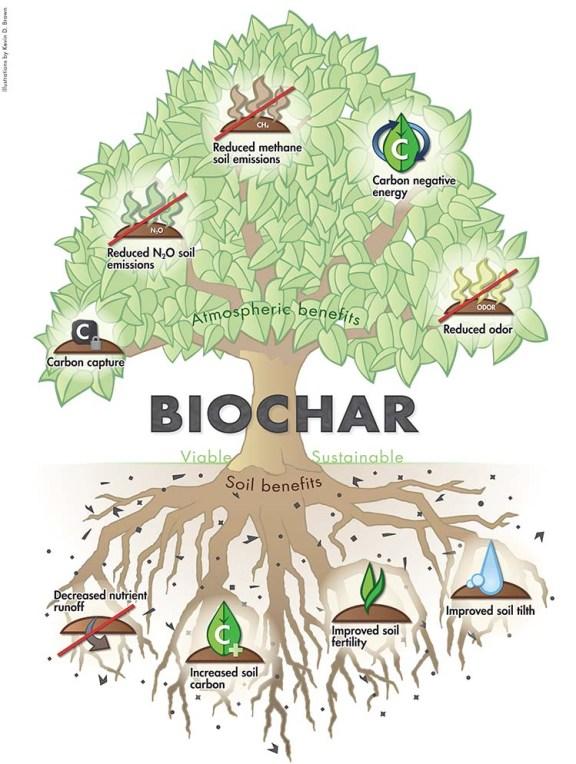 Biochar TREE of Benfits from International Biochar Intitiative by Red Garner/IBI