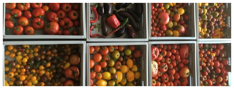 Collection de tomates