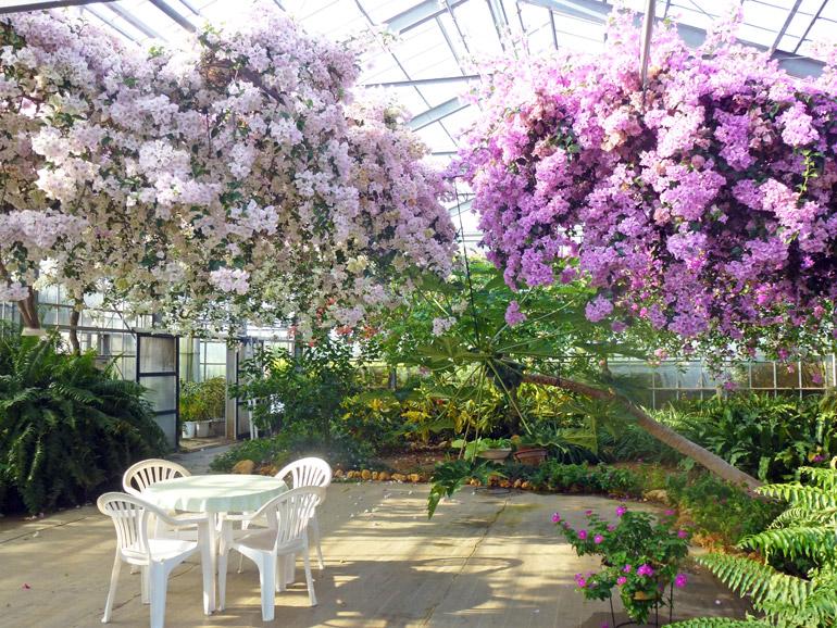四季折々に咲き乱れるブーゲンビレアをご覧頂きながら、ゆったりと流れる南国の時間をお楽しみ下さい